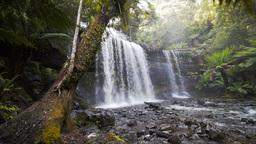 russell falls tasmania Footage