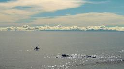 sea kayaker Footage