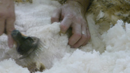 shearing a sheep Footage