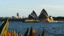 sydney opera house with flowers and ferry Footage