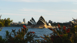 sydney opera house and red native flowers Footage