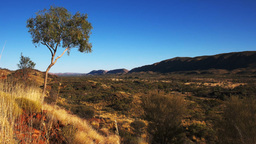 west macdonell ranges and gum tree Footage