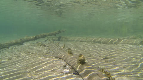 Sunken trees in shallow water with sand bottom Footage