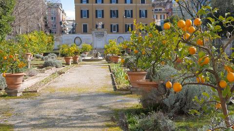 Lemon Garden Villa Borghese, Rome, Italy. 4K stock footage