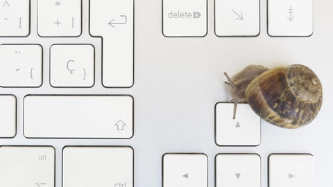 Snail Awaking Over A Keyboard stock footage