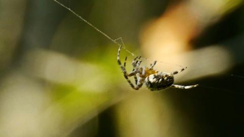 spider macro Stock Video Footage