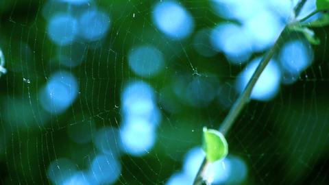 spiderweb Stock Video Footage