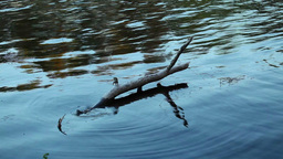 Snag in the Water Stock Video Footage