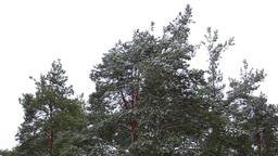 Snowfall Stock Video Footage
