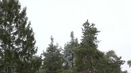 Snowfall Upper Trees Stock Video Footage
