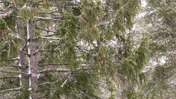 Snowfall in Forest Stock Video Footage