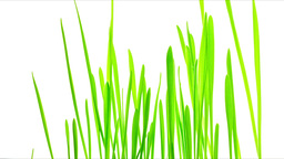 Green Grass Growing Timelapse Stock Video Footage