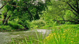 Small River Stock Video Footage