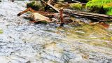 Close-up of the bank mountain river with pure wate Footage