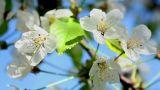 Flowering tree 2 Footage