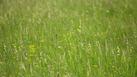 Grass 3 Stock Video Footage