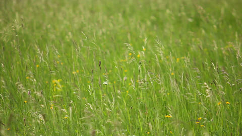 Grass 3 Stock Video Footage
