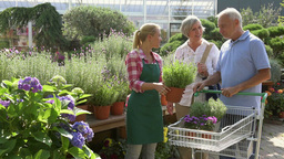 Couple Buying Flowers At Garden Center With Assistant stock footage