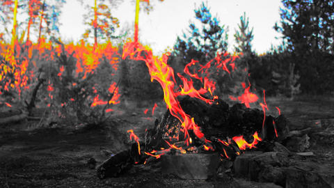Bonfire In The Forest stock footage