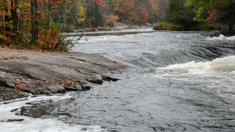 Small rapids and colorful autumn forest at Oxtongue river Footage