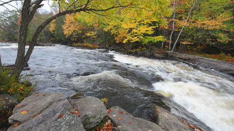 Huge boulders and colorful fall forest on a riverside Footage