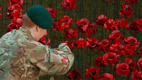 Remembrance poppies tribute to fallen soldiers Footage