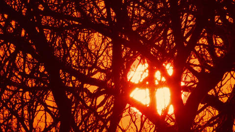 Telephoto winter sunrise behind bare trees Footage