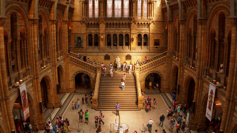Natural History Museum Indoor Timelapse Stock Video Footage