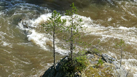 big rock with young tree in mountain river Footage