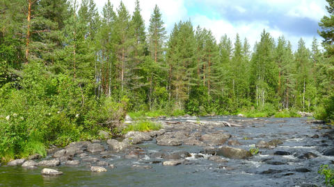 landscape with river and forest in Karelia Footage