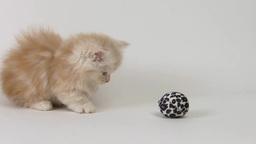ボールに驚く子猫 Footage