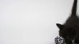 ボールで遊ぶ黒い子猫 Footage