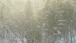 林に降る輝く雪 Footage