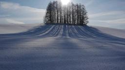 丘の上の林の影 Footage