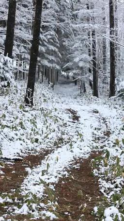 雪降る小径 Footage