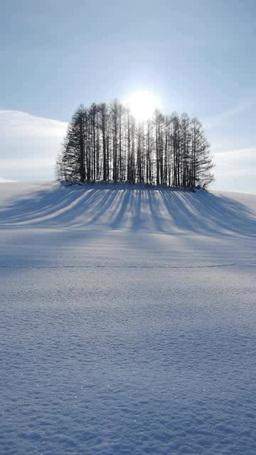 丘の林と影 Footage