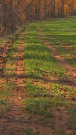 カラマツの落葉と牧草地 Footage