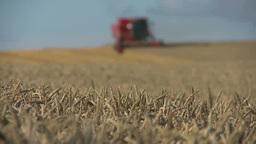 小麦を収穫するコンバイン Footage
