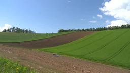 アスパラの収穫 Footage