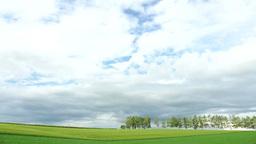 小麦の丘と白樺並木 Footage