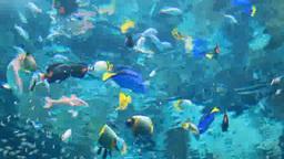 アデヤッコなどの熱帯魚 Footage