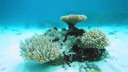 珊瑚礁とスズメダイなどの熱帯魚の群れ Footage