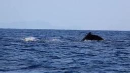ザトウクジラのペアの潮吹きとテールアップと渡名喜島 Footage
