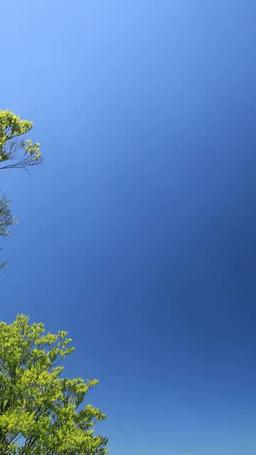 新緑のブナ林の樹海と岩木山 Footage