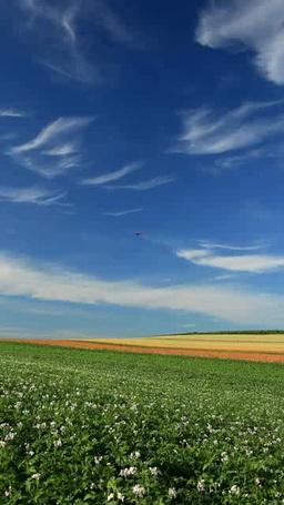 花咲くジャガイモ畑と木立と赤麦畑 Footage