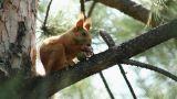 Squirrel 4 Footage