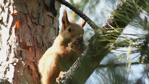 Squirrel 6 Stock Video Footage