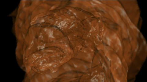 debris mud flow,stone,feces Stock Video Footage