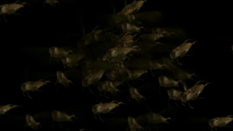 Locust,Disaster.Grasshoppers,insects,shaped,wasps,bees,fl... Stock Video Footage