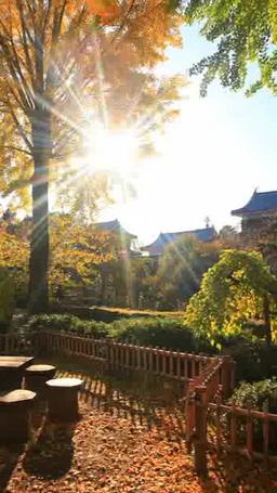 イチョウの紅葉と上田城の北櫓と南櫓と東虎口櫓門と木も Footage
